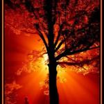 Etre au bon endroit au bon moment dans SAGESSE des PLEIADES prière-150x150