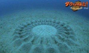 Le Cercle Akashique dans KRYEON nous parle dessin_poisson-300x179