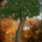 Les racines dans TELOS nous parle 3-copie-150x150