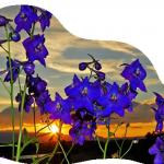 Comment naviguer dans la réalité dans SAGESSE des PLEIADES fleur-150x150