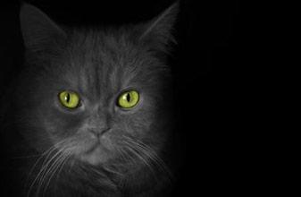Tranche de vie d'un illuminé dans CHEMIN le MOINS FREQUENTE chat