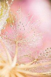 perle pluie