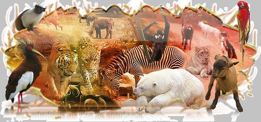 animaux de la terre