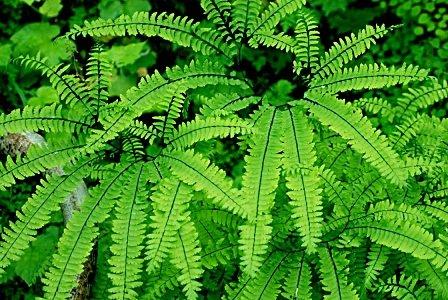 plante-jardin-vertical